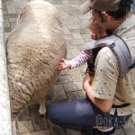 動物と触れ合える!アスレチック遊具でも遊べる!家族でコンパクトに楽しめる六甲山牧場