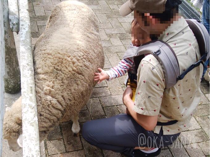 六甲山牧場の羊にタッチ