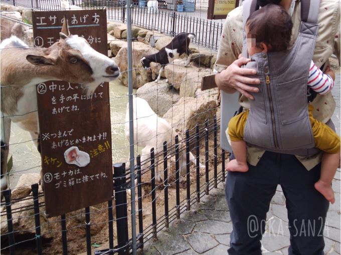 六甲山牧場のヤギにエサやり