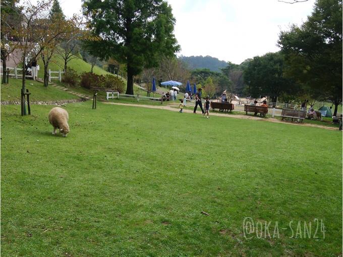 六甲山牧場の芝生
