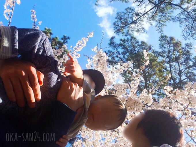 夙川公園お花見