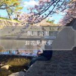 子どもと行く夙川公園お花見散歩♪スマホでも十分素敵な写真が撮れる!
